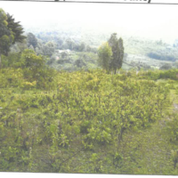 220. PRIME AGRICULTURAL PROPERTY IN NYAWITA AREA, KARATENG IN KISUMU COUNTY. -KC