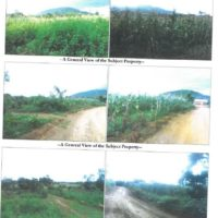 56.PRIME AGRICULTURAL PROPERTY IN BUSIA COUNTY. -KC