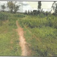 86. PRIME AGRICULTURAL PROPERTY IN KAKAMEGA COUNTY ON 5TH DECEMBER, 2019 OUTSIDE KCB BANK MUMIAS.-KC